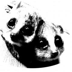 microcebe.jpg
